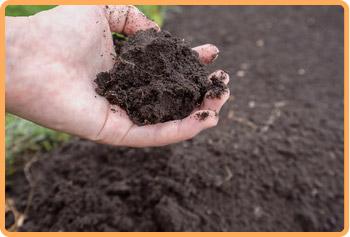 100%自然農法