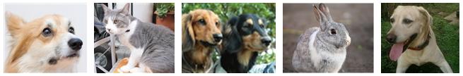 免疫力が低下しガンになった動物たち