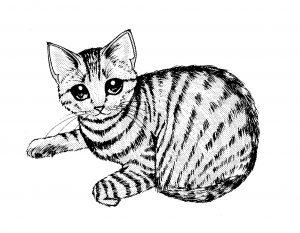 猫エイズが治った猫