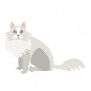 毛が抜けてしまった猫
