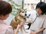 獣医師 向後亜希
