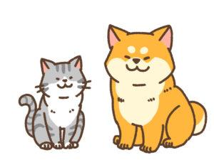 健康な柴犬と猫
